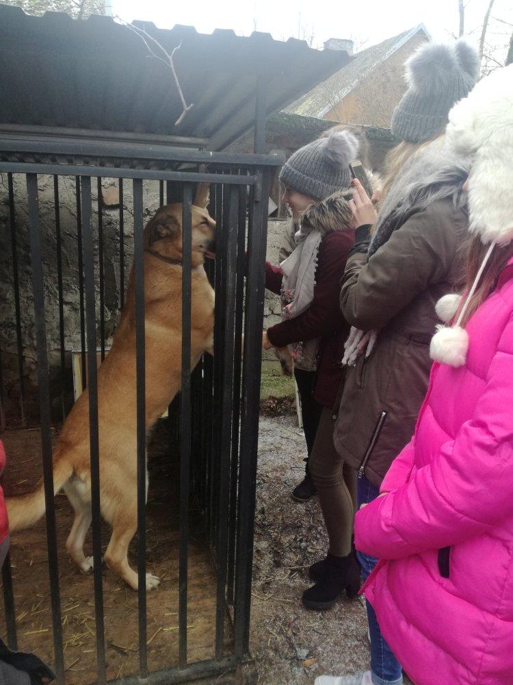 Przegladasz: Pomoc  zwierzakom.